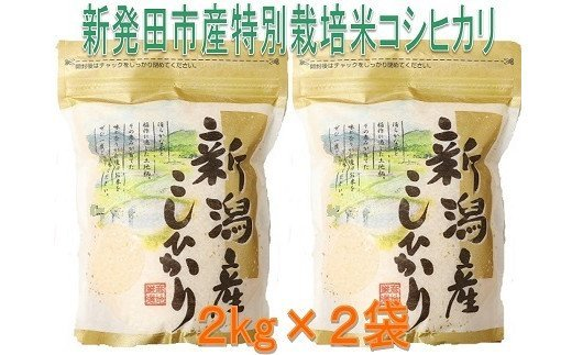 【新米予約!10月以降発送】D31_1 新潟県新発田市産特別栽培米コシヒカリ(2kg×2袋)