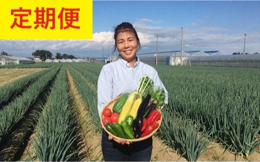 【定期便】澁澤さんちの野菜セット定期便 年4回 【11218-0190】