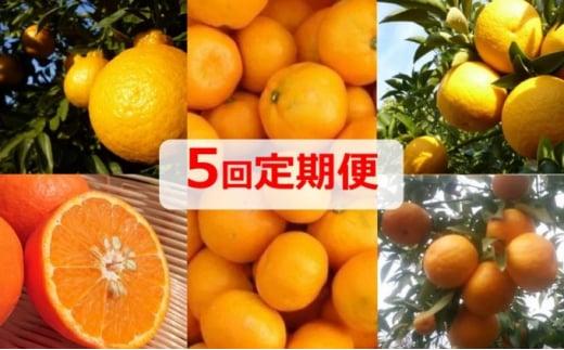 [№5850-0616]【5回定期便】フジカワ果樹園オリジナル・新季節の柑橘セット