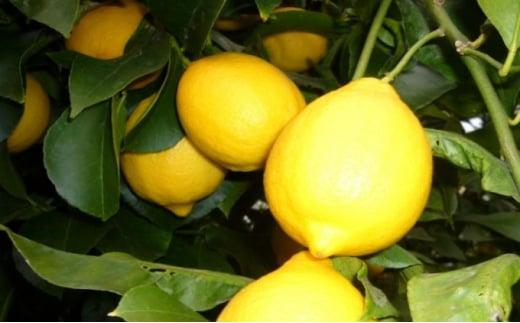 [№5850-0612]イエローレモン(露地栽培)約2.5kg