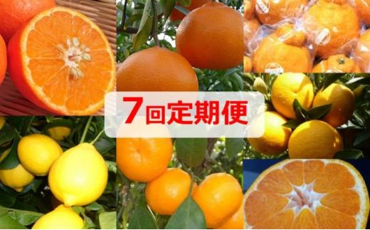 [№5850-0617]【7回定期便】フジカワ果樹園オリジナル・新季節の柑橘セット
