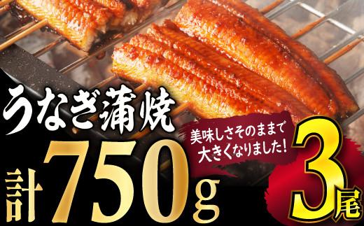 【数量限定】ふっくら肉厚うなぎ蒲焼3尾 SE1005-15