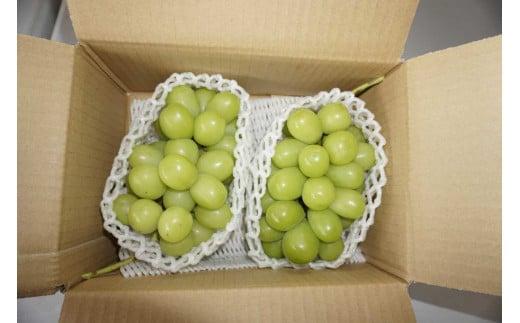 3605 【先行受付】農家直送シャインマスカット 1kg(2房)