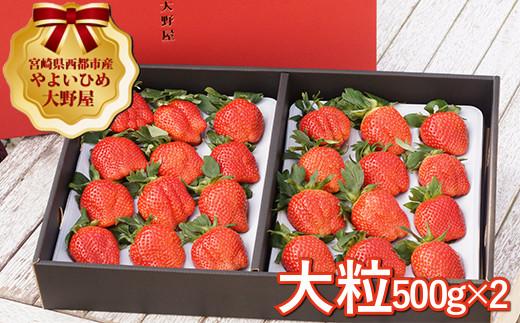 今が旬!!苺大野屋 やよいひめ 厳選大粒いちご1kg 宮崎県西都市 <2-27>
