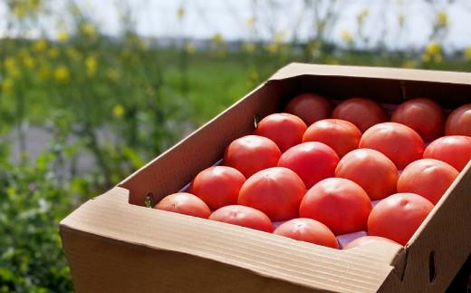 野菜 ソムリエ 岡田健志郎 が育てた トマト 4kg