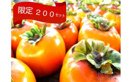 旬の味覚「大平柿」6kg  T03401