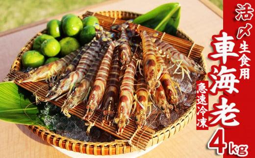 【久米島漁協】活〆冷凍車海老 生食用4kg