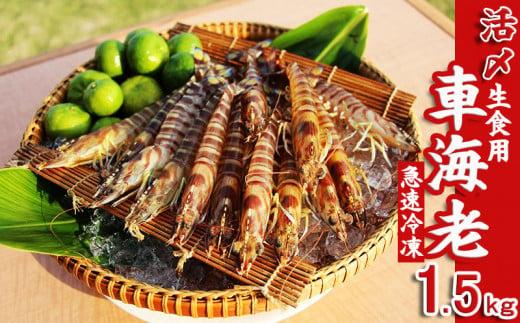 【久米島漁協】活〆冷凍車海老 生食用1.5kg