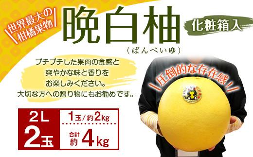 【期間限定】八代特産 晩白柚(ばんぺいゆ)2L(約2kg)サイズ 2玉