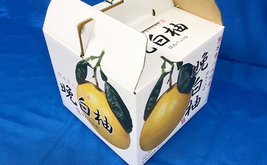 【期間限定】八代特産 晩白柚(ばんぺいゆ)2L(約2kg)サイズ1玉 化粧箱入