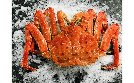 D-54007 【北海道根室産】ボイル冷凍たらば蟹姿3kg前後×1尾