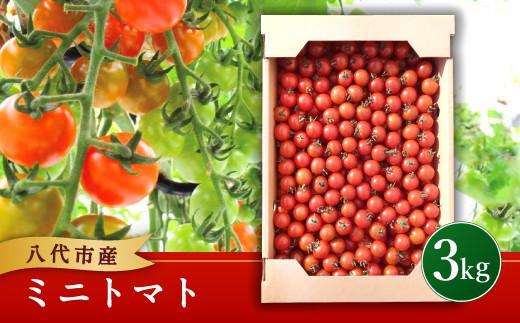 八代市 松永農園の ミニトマト 3kg