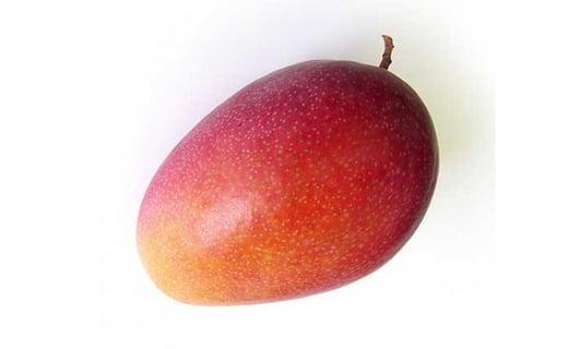 あったか温果mango マンゴー / 玉文-ぎょくぶん-