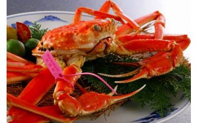 日本海産 タグ付きゆで松葉かに特大サイズ 2匹