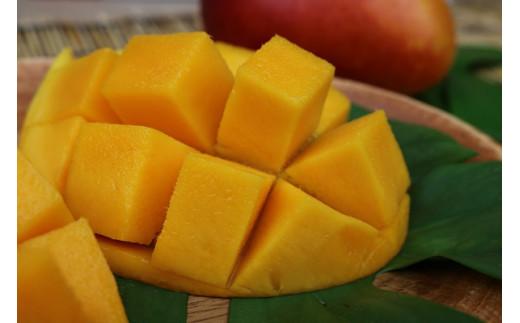 【2021年発送】南国フーズの完熟アップルマンゴー 約2Kg
