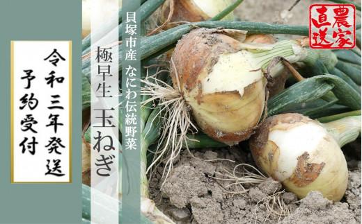 B0088.【北野農園から直送】泉州伝統野菜・貝塚極早生(ごくわせ)玉ねぎ5kg