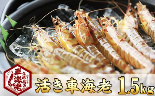 """【2020年11月下旬から発送】""""活き""""車海老:1.5kg"""