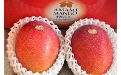 【先行予約】【2021年発送分】お日様の恵み。奄美のあま~い絶品マンゴー(1kg/秀品)贈答可