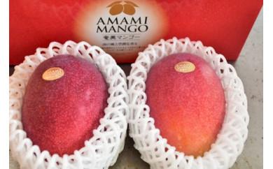 【先行予約】【2021年発送分】お日様の恵み。奄美のあま~い絶品マンゴー(900g/秀品)贈答可