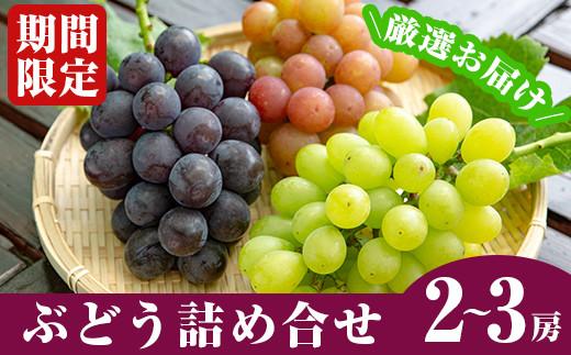 A-055 <先行予約受付中!2021年8月中の発送予定>霧島産ぶどう詰め合わせ(2~3房)冷涼な霧島の水で育った甘くてジューシーな種あり葡萄と食べやすい種無し葡萄の両方を詰め合わせでお届け【つるまる農園】