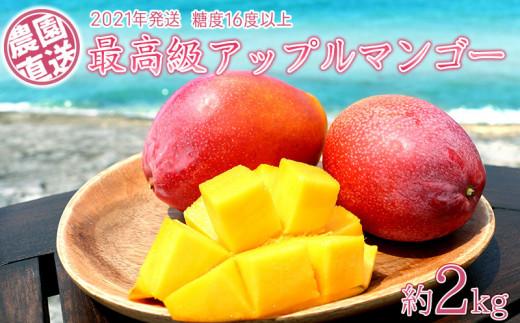 農園から直送する最高級アップルマンゴー!糖度16度以上 約2kg【2021年発送】
