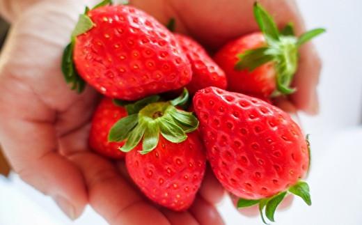自社農園で収穫した「章姫(あきひめ)」「紅(べに)ほっぺ」2種類のいちごを使用