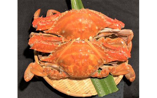 [№39-0624]鮮魚卸お勧めの愛知産天然ワタリガニ!2杯 (ボイル済み)