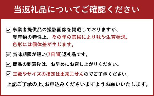 熊本県宇城市産 不知火 約7kg ご家庭用 高橋果樹園 果物 柑橘