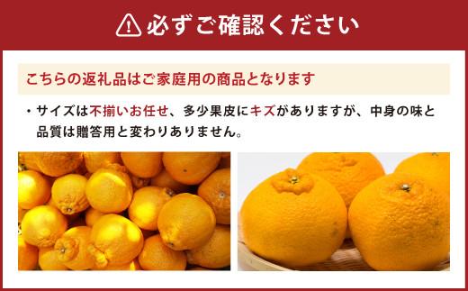 恋する 不知火(家庭用)約10kg