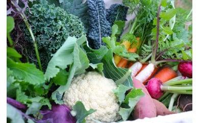 季節を彩る旬の野菜セット (農薬・化学肥料不使用)