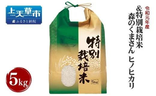 米 くま さん 森 の