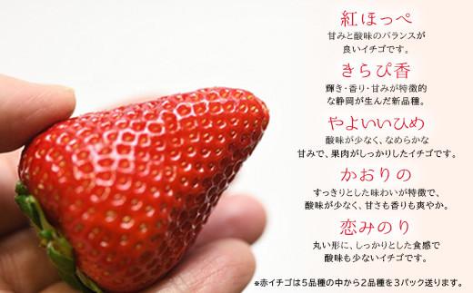赤イチゴは、紅ほっぺ、きらぴ香、やよいひめ、かおりの、恋みのりから2P、白イチゴ1P、計4P