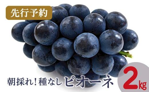 B-363 【先行予約】朝採れ種なしピオーネ 2kg(2021年7月より発送)