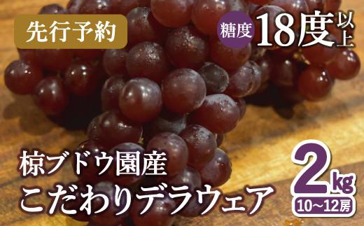 B-351 【先行予約】椋さんのこだわりデラウェア 2kg(2021年6月より発送)