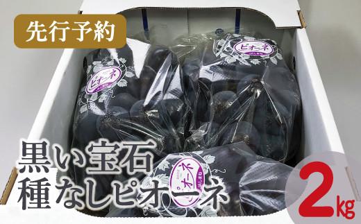 B-389 【先行予約】黒い宝石「種なしピオーネ」 2kg(2021年7月より発送)