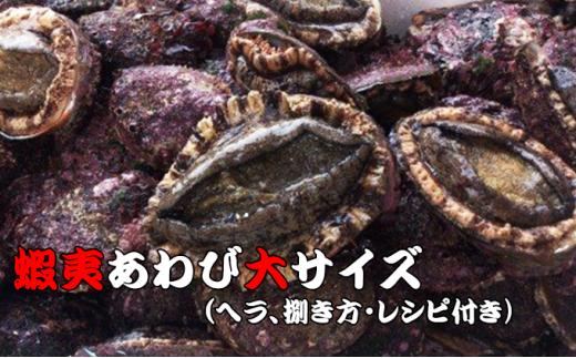 [№5233-0009]三陸の希少な海鮮、高級あわび!贅沢・蝦夷あわびパック