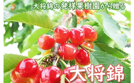 0075-2103 さくらんぼ(大将錦)500g ご家庭用