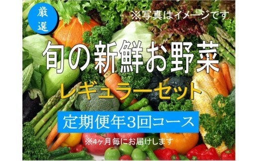 No.1006 大人気!旬の新鮮お野菜 レギュラーセット(詰め合わせ)【定期便3回】