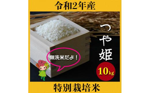 米 10kg つや姫 特別栽培米 無洗米 令和2年産