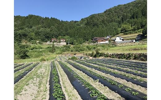 三好市池田町野呂内地区。山間部の高冷地の寒暖差が美味しい野菜を生み出します。