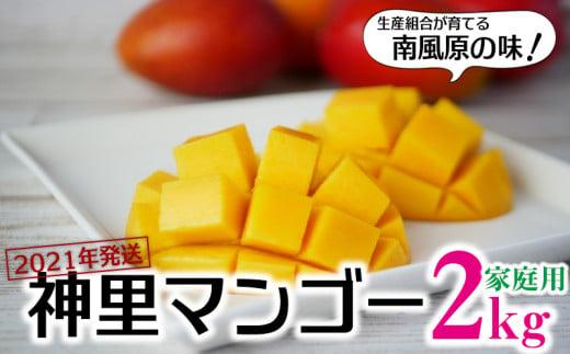【2021年発送】生産組合が育てる神里のマンゴー2kg(家庭用)