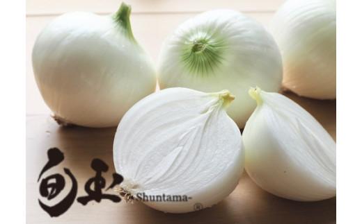 新玉ねぎ 生がおいしい 神重農産のブランド玉ねぎ「旬玉」5㎏ H105-012