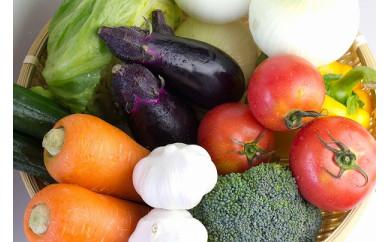 【オーガニック】シェフの目線「旬野菜食べ切りハーフセット」