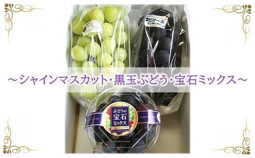 663-R3 【令和3年9月中旬~発送予定】シャインマスカット+黒玉ぶどう+宝石ミックス