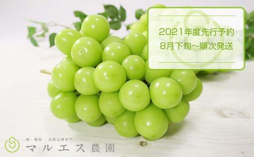 B2-111.【2021年先行予約】朝収穫のみ配送!シャインマスカット2房1.2kg以上(MS)