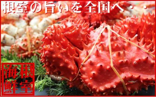 B-57018 【北海道根室産】花咲ガニ1.1kg前後×1尾