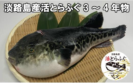 B156:老舗花光の淡路島産活とらふぐ【冷蔵】3~4年物(4~8人前)とたかはしのポン酢食べ比べset