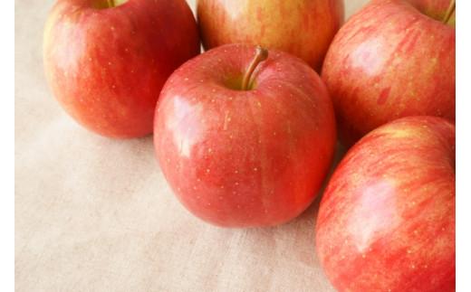 大人気! リンゴの王様サンふじ