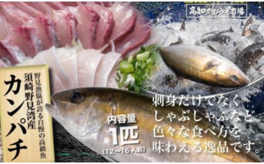 【期間限定!】 高級カンパチ 「須崎勘八」まるごと・1匹
