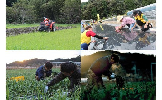 作付けや収穫期の農繁期は、地域の学生や若者やシルバーさんに支援頂きながら社員総出で農作業に取り掛かっています。